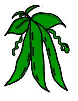 beans clipart vegetable