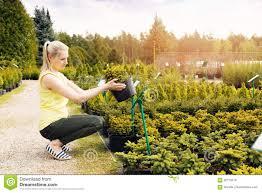 choosing ornamental conifer tree at outdoor plant nursery