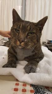 California Wildfire Animal Rescue by Cat With Singed Whiskers Brings Attention To Plight Of Animals In
