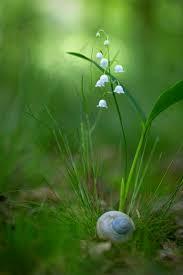 104 best flowers images on pinterest flowers beautiful flowers