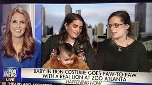 baby in lion costume goes paw to paw with a real lion at zoo