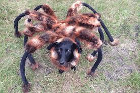 dog in spider costume already wins halloween 2014 prank wars