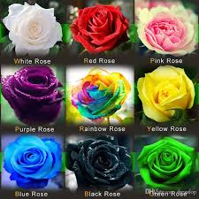 black roses for sale discount hot sale colourful flower seeds 100 seeds package