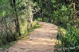 native rainforest plants free botanic gardens across nsw sydney