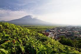 Teh Kayu Aro kayu aro perkebunan teh orthodox tertua di indonesia beepdo