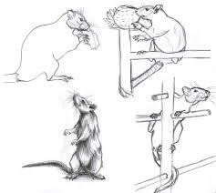rat sketches by lighiting dragon on deviantart