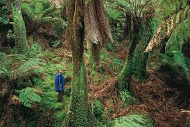 native plants in the tropical rainforest australia u0027s rainforests tourism australia