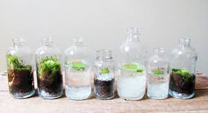 milkweed go green during winter with terrariums design milk