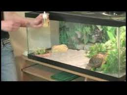 how to care for box turtles box turtle diet