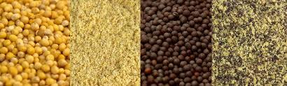 ground mustard spice cabinet 101 ground mustard and mustard seeds