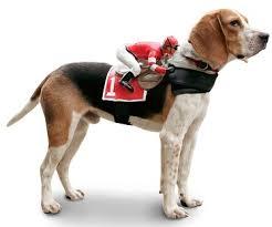 Large Dog Halloween Costume Ideas Jockey Rider Pet Costume Dog Move Personal