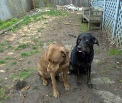 want a dog friendly yard consider turfing it toronto star
