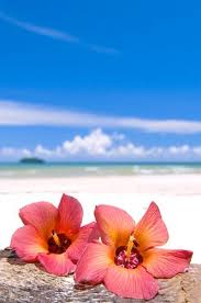 What Is The Meaning Of The Hibiscus Flower - best 25 hawaiian flowers ideas on pinterest flowers beautiful