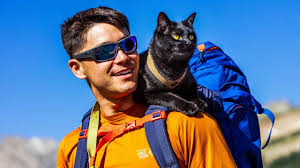 Colorado How To Travel With A Cat images The backpacking cat who travels the us with his human jpg