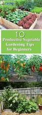 Vegetable Container Gardening Guide by Beginner U0027s Guide For Productive Vegetable Garden Vegetable