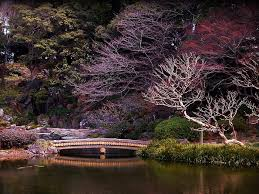 forest lake spring trees color japan hd wallpaper android forest