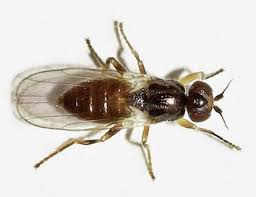 How To Get Rid Of Backyard Flies by 30 Ways To Get Rid Of Gnats Inside And Outside The House