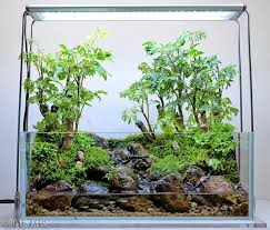 Aquascaping Competition 477 Best Nature In A Box Paludariums Images On Pinterest