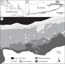 Map Of St Croix Temporal Dynamics Of Shallow Seagrass U2013associated Molluscan