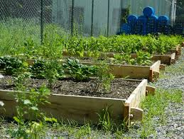 great sustainable vegetable garden how to start your own