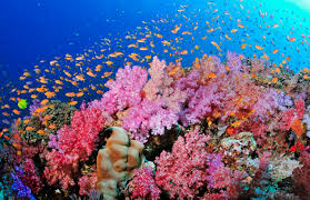 Coral Reefs Of The World Map by Why Reefs Matter U2014 Coral Vita Reef Restoration Solutions