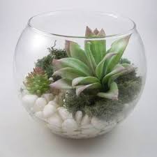 best glass planters for plants products on wanelo