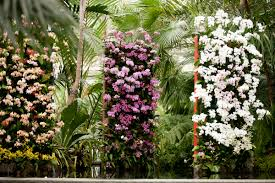 brazil native plants the orchid show first look plant talk