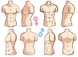 Woman Anatomy Video 70 Best Anime Anatomy Images On Pinterest Drawing Art Tutorials