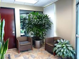 plants for office new best plants for office maisonmiel
