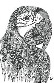 baby parrot coloring pages parrots sheets adults print