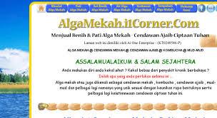 access algamekah i1corner com menjual pati alga mekah benih