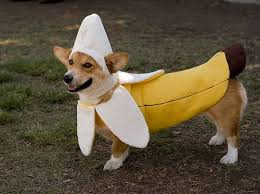 Doggy Halloween Costumes 100 Silliest Pet Halloween Costumes 1