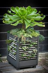 indoor decorative trees for the home 15 best indoor succulent planting ideas that can beautify your