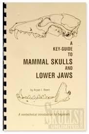 dog u0026 cat skull special skulls unlimited 1 800 659 skull