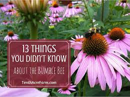 13 things you didn u0027t know about the bumble bee tenth acre farm