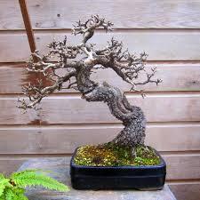 2349 best bonsai penjing images on pinterest bonsai trees
