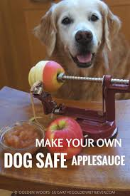 thanksgiving dog 97 best yum delish dog treats recipes for dogs people images on