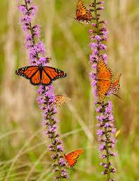 free images nature meadow prairie flower orange herb