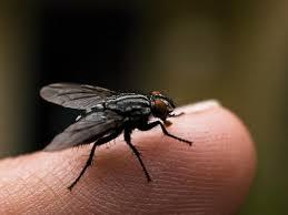 Getting Rid Of Flies In Backyard The 25 Best Get Rid Of Flies Ideas On Pinterest Repel Flies