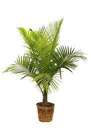 fresh indoor plant pots stands 8250