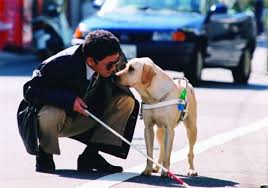 Dogs Helping Blind People Say Bye To Blind Problems Animalsandourhealth