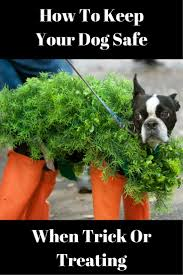 halloween city strongsville ohio 55 best animal safety images on pinterest pet health safety and
