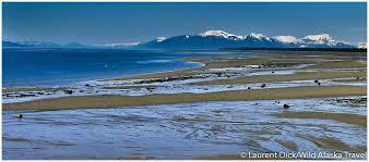 Alaska beaches images Sandy beaches near gustavus alaska alaska365 jpg