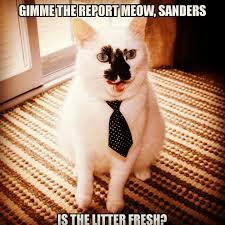 Cat Suit Meme - businesscat is all business litter cat meme throwback thursday