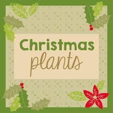 the bunches christmas plants range the bunches blog bunches