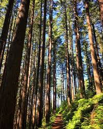 gorgeous trees picture of columbia river gorge national scenic