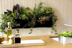 kitchen garden indoor gardening ideas