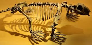 Warm Than 252 Million Years Ago Mammal Ancestors Became Warm Blooded