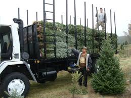 christmas tree delivery anr tree farm home page