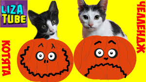 halloween kittens halloween cats u0027 challenge who will find some treats for liza